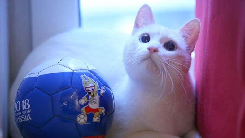 FROM OCTOPUS PAUL TO ACHILLES, A PSYCHIC CAT SET FOR WORLD CUP RESULTS PREDICTIONS